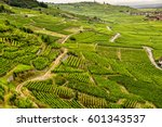 Hills Covered With Vineyards I...