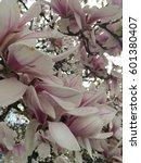 magnolia  park | Shutterstock . vector #601380407