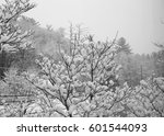 Snowy Tree Branches And Power...