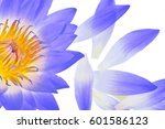water lily | Shutterstock . vector #601586123