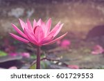 pink lotus vintage style | Shutterstock . vector #601729553