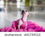 dog funny | Shutterstock . vector #601739213