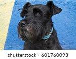 Black Schnauzer Dog On...