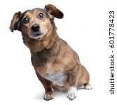 Stock photo studio shot of an adorable mixed breed dog sitting on white background 601778423