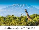 giraffe in the bush | Shutterstock . vector #601859153