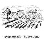 Rural landscape field wheat in graphical style. Hand drawn and converted to vector Illustration.