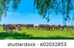 Herd Of Horses Grazing In Fiel...