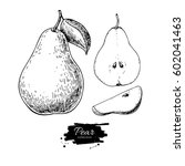 pear vector drawing. isolated... | Shutterstock .eps vector #602041463
