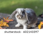 Stock photo domestic bunny rabbit on the grass 602143397