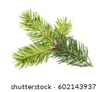 pine branch isolated on white... | Shutterstock . vector #602143937