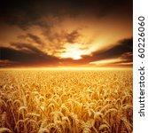 Golden Fields Of Beautiful...