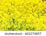 canola flower | Shutterstock . vector #602274857