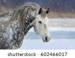 Grey Horse Portrait With Long...