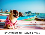 Stock photo cute chihuahua dog wearing sunglasses on a kayak at the ocean shore hdr vintage style 602517413