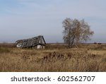 Old Hut And Tree