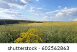 Wheat Fields In The Spring