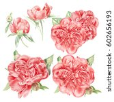 watercolor red peonies set | Shutterstock . vector #602656193
