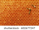 bee honeycombs with honey and... | Shutterstock . vector #602677247