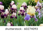 Beds With Irises In A Summer...