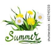 lettering summer chamomile herb ... | Shutterstock .eps vector #602745233