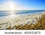 miami beach  sunrise. located...   Shutterstock . vector #602921873