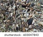 Top View Of Shells  Seaweed ...