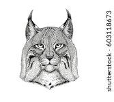 wild cat lynx bobcat trot hand... | Shutterstock .eps vector #603118673