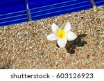 white plumeria flowers | Shutterstock . vector #603126923