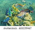 Tropical Fish Near Coral Reef....