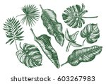 ink hand drawn set of tropical... | Shutterstock .eps vector #603267983