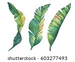 set of exotic tropical banana... | Shutterstock . vector #603277493