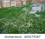 Grass Flowers At Pamukkale ...