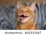 Small photo of funny ginger cat