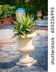 Small photo of Dry Agave Angustifolia (Caribbean Agave) on exotic pot decorated in the garden