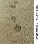Animal Footprints Dog...