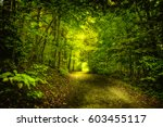 Stock photo the green nature 603455117