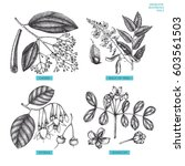vector collection of hand drawn ... | Shutterstock .eps vector #603561503