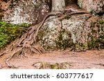 Tree Growing On A Rock With...