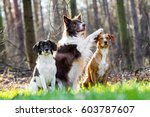 Three Sitting Dogs  One Of The...