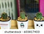 small pretty cactus in flower... | Shutterstock . vector #603817403