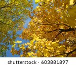 the autumn sky  | Shutterstock . vector #603881897