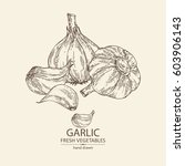 background with garlic. hand... | Shutterstock .eps vector #603906143