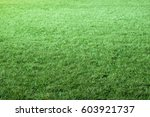 Close Up Photo Of Trimmed Gras...