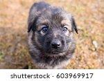 german shepherd puppy | Shutterstock . vector #603969917