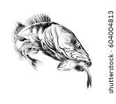 Predatory Fish Pike Caught And...