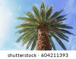 one tropical palm tree on blue... | Shutterstock . vector #604211393