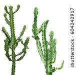 Set Of Tall Cactus Plants...