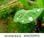 green leaf with water droplets... | Shutterstock . vector #604250993