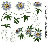 passiflora exotic flowers and... | Shutterstock .eps vector #604596227