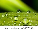 drop of water on a green leaf | Shutterstock . vector #60462550
